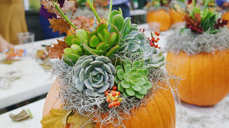DIY Pumpkulent Class with Garden Living