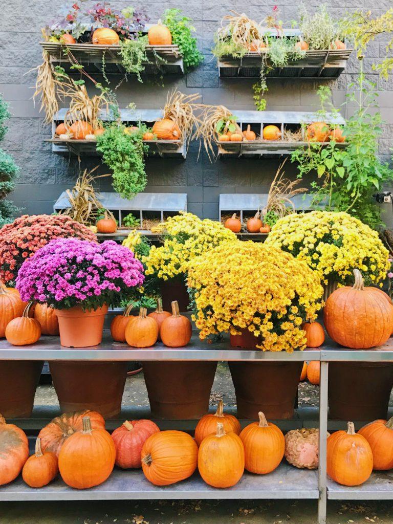DIY Pumpkulent Class with Garden Living in Fayetteville, AR